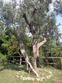 Characteristic self catering flat with garden. Rocchetta al Volturno. photo 11