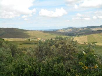 Country house with olive grove for sale in southern Abruzzo. Img4