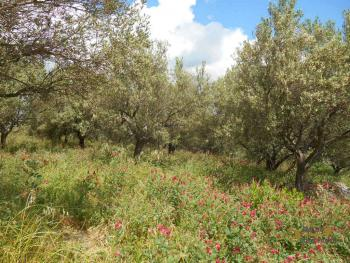 Country house with olive grove for sale in southern Abruzzo. Img7