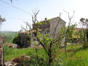 Country house with olive grove for sale in southern Abruzzo. Img23