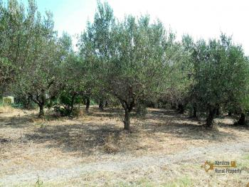 Country house with olive grove for sale in Atessa. Abruzzo. Img3
