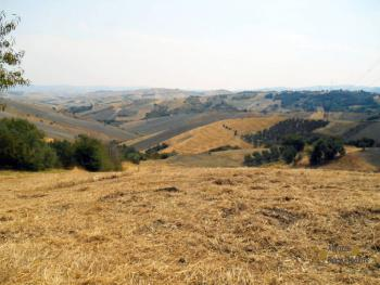 Country house with olive grove for sale in Atessa. Abruzzo. Img4