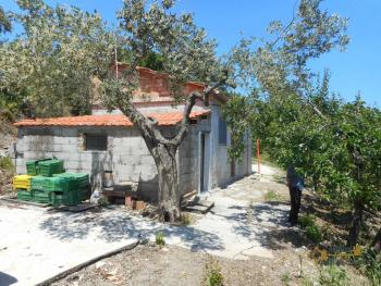 Plot of land of 3500 sqm with country shed. Dogliola. Img12