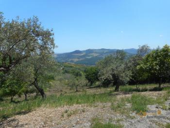 Plot of land of 3500 sqm with country shed. Dogliola. Img5
