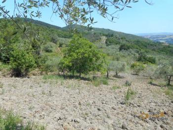 Plot of land of 3500 sqm with country shed. Dogliola. Img2
