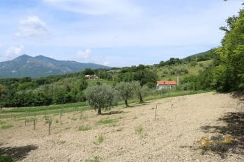Tiny country house surrounded by 6000 sqm of land. Salcito. Img21