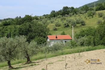 Tiny country house surrounded by 6000 sqm of land. Salcito. Img22