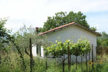 Tiny country house surrounded by 6000 sqm of land. Salcito. Img18