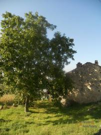 Traditional stone house with garden in needs of renovation. Italy | Abruzzo | Tornareccio . € 15.000 Ref.: TO1251 photo 2