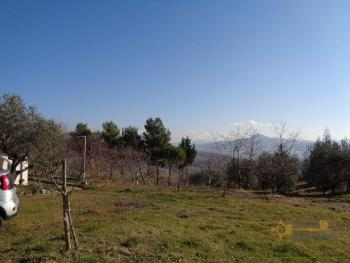 Rustic villa surrounded by 9000 sqm of land with olive grove. Img6