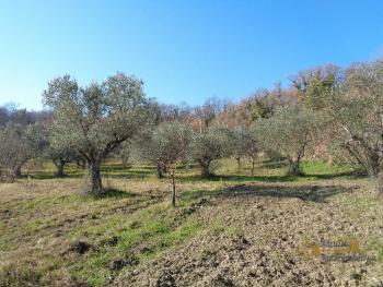 Rustic villa surrounded by 9000 sqm of land with olive grove. Img5